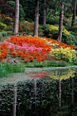 DAZZLING MAY DISPLAY OF AZALEAS BY THE LAKE AT LEONARDSLEE SUSSEX