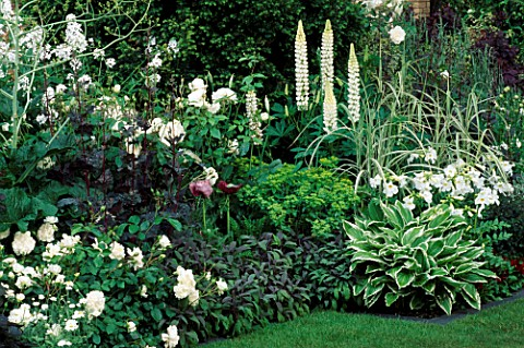WHITE_BORDER_WITH_ROSES__LUPIN_NOBLE_MAIDEN__HOSTAS_IN_THE_TELEGRAPH_GARDEN_CHELSEA95_DESIGNER_ALENN