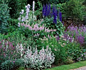 PURPLE COMBINATION OF DELPHINIUM CONSPICUOUS  ACHILLEA LILAC BEAUTY AND GALEGA HIS MAJESTY AT WOLLERTON OLD HALL