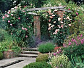 THE ROSE PERGOLA AT WOLLERTON OLD HALL  SHROPSHIRE COVERED WITH ROSA ALOHA  SANDERS WHITE AND COMPASSION.
