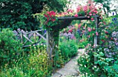 PERGOLA OVER PATH WITH ROSE MINNEHAHA  MALVA MOSCHATA  CAMPANULA LACTIFLORA  SLEIGHTHOLME DALE LODGE  NORTH YORKSHIRE