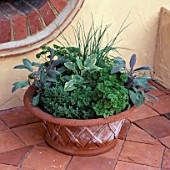 TERRACOTTA POT PLANTED WITH FOLLOWING HERBS: PARSLEY  SAGE  AND CHIVES
