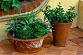 TERRACOTTA POT PLANTED WITH FOLLOWING HERBS: PARSLEY  SAGE  CHIVES AND MINT. DESIGNER: JANE NICHOLS