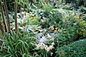 POND; WATERSIDE PLANTING OF RHEUM PALMATUM  HOSTAS  WHITE ASTILB  IRIS PSEUDOCORUS & EUPHORBIA GRIFFITHII.ASHTREE COTTAGE.