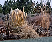 FROSTED BORDER WITH PHORMIUMS MISCANTHUS SP ARTEMISIA POWIS CASTLE PENNISETUM ALOPECUROIDES CORTADERIA PUMILA THE OLD VICARAGE  NORFOLK.