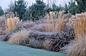 PHORMIUMS MISCANTHUS SP ARTEMISIA POWIS CASTLE PENNISETUM ALOPECUROIDES CORTADERIA PUMILA THE OLD VICARAGE  NORFOLK