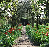 SPRING: BRIGHT RED TULIPS APELDOORN LINE COBBLED PATH RUNNING THROUGH THE LABURNUM TUNNEL/ARCH. BARNSLEY HOUSE GARDEN  GLOUCESTERSHIRE