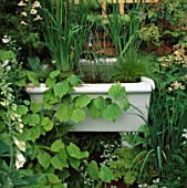 OLD SINK USED AS SMALL POND WITH IRIS SIBIRICA TYPHA MAXIMA SCIRPUS CERNUUS  LINDERA OBTUSILOBA. DESIGNER:ROGER PLATTS