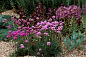 ARMERIA MARITIMA DUSSELDORFER STOLZ ALLIUM CHRISTOPHII & SALVIA MULTICAULIS. THE BETH CHATTO GARDENS  ESSEX