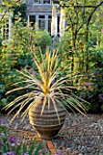 DRACAENA AUSTRALIS ALBERTII IN CONTAINER ON PEBBLE/BRICK PARTERRE  EREMURUS HIMALAICUS IN B/G. THE GARDEN HSE  GLOS.