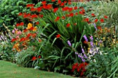 HERBACEOUS BORDER DOMINATED BY CROCOSMIA LUCIFER. CHENIES MANOR  BUCKS.