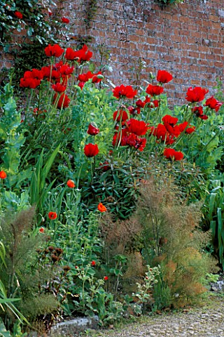 PAPAVER_BEAUTY_OF_LIVERMORE_ROSA_PARKDIREKTOR_RIGGERS__PAPAVER_SOMNIFERUM_HADSPEN_HOUSE_GARDEN__SOME