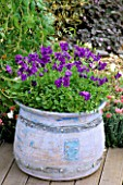 PURPLE MINIATURE VIOLAS IN CERAMIC CONTAINER BY EMMA LUSH IN THE SUN ALLIANCE/AMATEUR GARDENING GARDEN. CHELSEA 97