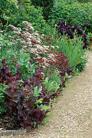 ANTHRISCUS_RAVENSWING__AQUILEGIA_DOUBLE_RED___ATRIPLEX_HORTENSIS_RUBRA_AND_IRIS_BLACK_SWAN_HADSPEN_G