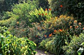 ORANGE BORDER: HEMEROCALLIS AZTEC  CROCOSMIA LUCIFER  OENOTHERA SUNSET BOULEVARD.  HADSPEN GARDEN  SOMERSET.