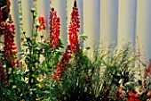 RED LUPINS GROW AGAINST PAINTED WOODEN FENCE IN THE GOOD LIFE GARDEN DESIGNED BY H.M.P. LEYHILL. HAMPTON COURT 97