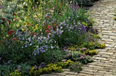 WILDFLOWER BORDER BESIDE BRICK PATHWAY: SEDUM ACRE  CAMPANULA ROTUNDIFOLIA  VALERIAN  LINARIA VULGARIS  VERONICA SPICATA  WILD THYME. DESIGNER: JULIE TOLL