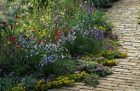 WILDFLOWER_BORDER_BESIDE_BRICK_PATHWAY_SEDUM_ACRE__CAMPANULA_ROTUNDIFOLIA__VALERIAN__LINARIA_VULGARI