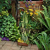 WATER FEATURE: OLD PUMP SURROUNDED BY ZANTEDESCHIAS  IRISES  PRIMULA BULLEYANA AND FERNS (YELLOW/BLUE THEME)
