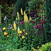 COTTAGE STYLE PLANTING OF ALLIUMS  LUPINS AND IRISES(YELLOW/PURPLE THEME) IN THE NATIONAL ASTHMA CAMPAIGN GARDEN. CHELSEA 1993