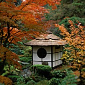 THE JAPANESE GARDEN AT TATTON PARK IN CHESHIRE. THE SHINTO TEMPLE IS SURROUNDED  BY BRILLIANTLY COLOURED JAPANESE MAPLES