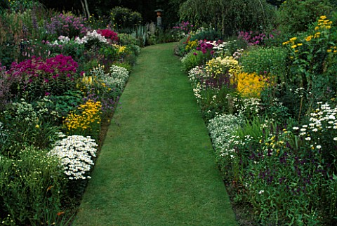 GRASS_PATH_BETWEEN_DOUBLE_HERBACEOUS_SUMMER_BORDERS_WITH_ANAPHALIS__SOLIDAGO_AND_ANTHEMIS_BUTTERSTRE