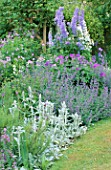 BLUE DELPHINIUMS VIOLA CORNUTA ALBA GERANIUM SYLVATICUM MAYFLOWER LUPIN NOBLE MAIDEN NEPETA SIX HILLS GIANT STACHYS  POLEMONIUM SONIAS BLUEBELL. THE WHITE HOUSE  SUSSEX