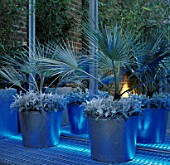 BLUE UP-LIGHTING SHINES ON LARGE METAL CONTAINERS WITH TRACHYCARPUS FORTUNEI AND SENECIO CINERARIA WHITE DIAMOND. DESIGNER STEPHEN WOODHAMS OWN GARDEN.