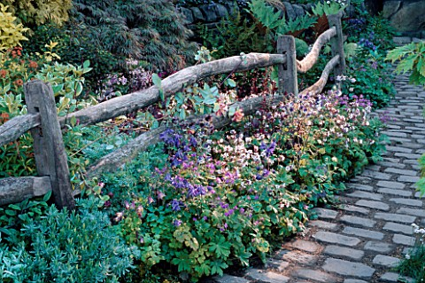 AQUILEGIAS_AND_GERANIUMS_BESIDE_A_WOODEN_FENCE_AND_COBBLESTONE_PATH_LEEDS_CITY_COUNCIL_GARDEN__CHELS