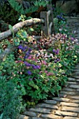 AQUILEGIAS AND GERANIUMS BESIDE A WOODEN FENCE AND COBBLESTONE PATH. LEEDS CITY COUNCIL GARDEN  CHELSEA 98
