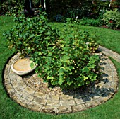 GOOSEBERRY BUSHES GROW IN THE MIDDLE OF BRICK CIRCLE. DESIGNER: LUCY GENT