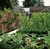 VEGETABLE GARDEN/POTAGER: CARDOONS  RHUBARB FORCING POT  PEA GRADUS AND LEAN -TO GREENHOUSE. SPIRIT OF HELIGAN GARDEN  HAMPTON COURT 98