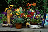 CANDLES IN COLOURED GLASS TUBES BESIDE GROUP OF SUMMER CONTAINERS ON TABLE WITH NEMESIA  PANSIES AND ECHEVERIAS. DESIGNER: LISETTE PLEASANCE
