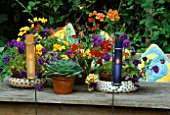 CANDLES IN COLOURED GLASS TUBES BESIDE A GROUP OF SUMMER CONTAINERS ON TABLE PLANTED WITH NEMESIA  PANSIES AND ECHEVERIAS. DESIGNER: LISETTE PLEASANCE