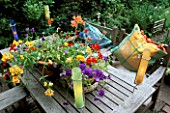 CANDLES IN COLOURED GLASS TUBES LIGHT UP  A GROUP OF SUMMER CONTAINERS ON TABLE. SEATS WITH CUSHIONS IN TONING COLOURS. DESIGNER: LISETTE PLEASANCE