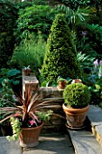 YEW CONES  BOX BALL IN POT AND CORDYLINE AUSTRALIS PURPUREA IN THE POT. DESIGNER JUDITH SHARPE