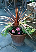 CORDYLINE AUSTRALIS PURPUREA  HELICHRYSUM PETIOLARE LIMELIGHT AND PINK  BEGONIA IN A POT. DESIGNER JUDITH SHARPE