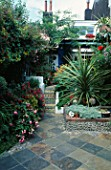 SMALL TOWN GARDEN: WITH FUCHSIAS AND A SPECIMEN DRACAENA FRAMING STEPS WITH PEBBLED TREADS AND TILED RISERS. WHITE MEDITERRANEAN WALLS. DESIGNERS: ANDREW & KARLA NEWELL