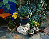 DECORATIVE FEATURES IN SMALL TOWN GARDEN:  AGAVE IN A BLUE GLAZED CONTAINER SURROUNDED BY TILES  PEBBLES &  BRICK FLOORING & ULTRAMARINE BLUE WALLS. DESIGN: ANDREW & KARLA NEWELL