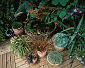 CONTAINERS OF GRASSES (OPHIOPOGON  CAREX  FESTUCA GLAUCA) AND AN AEONIUM BESIDE A HALF BARREL WATER FEATURE PLANTED WITH WATER LILIES. WOODEN DECKING. DESIGN: ANDREW & KARLA NEWELL