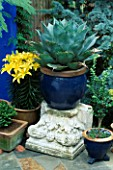 YELLOW LILIES BESIDE AN AGAVE IN A BLUE GLAZED POT. DESIGNERS: ANDREW & KARLA NEWELL