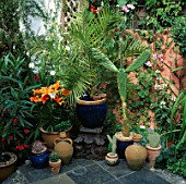 SMALL COURTYARD GARDEN: OLIVE JAR  CACTUS  PALM AND ORANGE LILIES IN POTS ON A TILED TERRACE. TO THE LEFT IS AN OLEANDER IN A POT. DESIGNERS: ANDREW & KARLA NEWELL