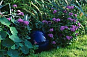 BLUE GAZING BALL IN THE BORDER SURROUNDED BY NASTURTIUM LEAVES AND AGERATUM. THE NICHOLS GARDEN  READING