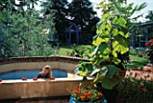 HAZEL PLAYS IN THE BUILT-IN PADDLING POOL. BESIDE HER ARE POTS OF CALEOLARIA F1 HYBRID SUNSET  ARCTOTIS FLAME AND PAWLONIA TOMENTOSA. THE NICHOLS GARDEN  READING