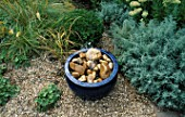 WATER FEATURE STEP-BY-STEP: BLUE CERAMIC POT PLACED ON TOP OF BLUE PLASTIC BUCKET AND FILLED WITH CREAMY BROWN ROCKS AND PEBBLES. BEHIND IS STIPA ARUNDINACEA AND KNIPHOFIA