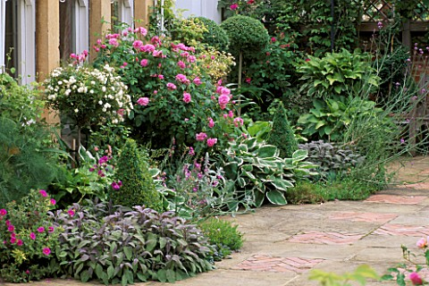 TERRACE_WITH_PURPLE_DAGE__HOSTAS__BOX_TOPIARY_AND_ROSES_ARCTIC_SUNRISE_AND_ISPAHAN_RANI_LALS_GARDEN_