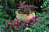 BURGUNDY TULIPS BESIDE A POT IN ROBERT CLARKS SAN FRANCISCO GARDEN