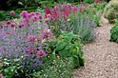 ALLIUM AFLATUNENSE PURPLE SENSATION   NEPETA SIX HILLS GIANT  ALLIUM CHRISTOPHII AND GLADIOLUS COMMUNIS BYZANTINUS.