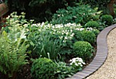 FRONT GARDEN WITH WHITE PLANTING: NARCISSUS GERANIUM  BELLIS  CLIPPED BOX BALLS  HOSTA  GERANIUM SYLVATICUM ALBUM AND FERNS