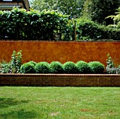 RAISED BED WITH BOX BALLS BACKED BY ITALIAN POLISHED PLASTER WALL AND PLEACHED LIMES. MODERNISTS TOWN GARDEN.